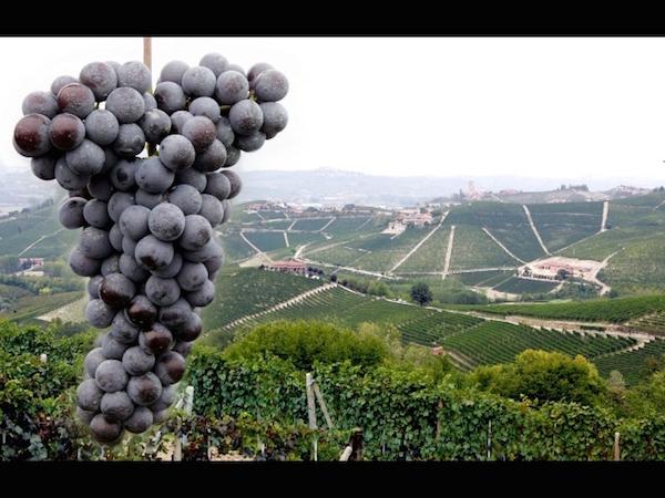 signori del vino TV