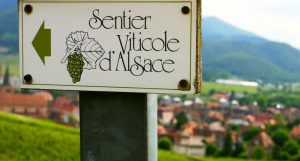 route-des-vins-d-alsace (1)